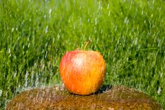 Apple & rain Stock Photos