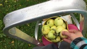 Apple rasgado pôs em uma cubeta com outras maçãs filme
