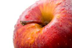 Apple in red Stock Photography