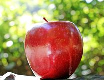 Apple, Red Apple, Red Chief, Red Stock Photo