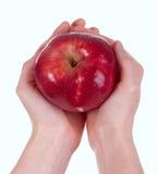 Apple red delicious en las manos de la mujer Imágenes de archivo libres de regalías