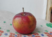 Apple. A red apple with water drops Stock Image