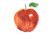 Apple red watercolor illustration isolated on white background royalty free illustration