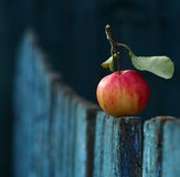 Apple. Red apple  on wooden fence Stock Image