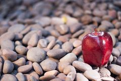 Apple resting on a bed of pebbles Royalty Free Stock Photos