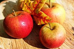 Apple, Ripe, Red, Autumn, Fruits Royalty Free Stock Image