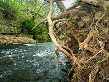 Apple River Canyon State Park Illinois. Erosion undercuts the Apple River bank in northern Illinois Stock Images