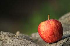An apple. On the rock Royalty Free Stock Photography