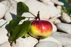 Apple on the  rocks. Apple  with a sprig on the white stones Royalty Free Stock Image