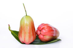 Apple & Rose Apple - materielbild Arkivbilder