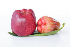 Apple & Rose Apple - materielbild Royaltyfria Bilder