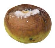 apple rotten Στοκ φωτογραφία με δικαίωμα ελεύθερης χρήσης