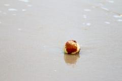 Apple rotten Stock Photo