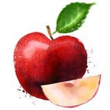 Apple rouge dirigent le calibre de conception de logo fruit ou Image libre de droits