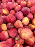 Apples Image Stock Images