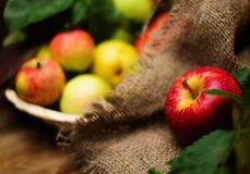 Apple on a sack Royalty Free Stock Images
