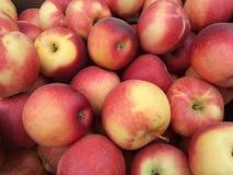 Apple-Sammeln Lizenzfreie Stockfotos