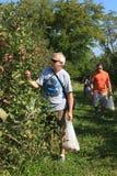 Apple-Sammeln-Virginia-Obstgarten-Familien-Aktivität Stockfotografie