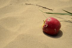 Apple in sand Stock Photography