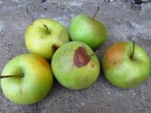 Apple se descompone y otros hongos de la putrefacción de la fruta Manzanas putrefactas fotos de archivo