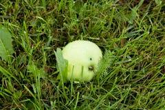 Apple se trouvant sur l'herbe Photographie stock libre de droits