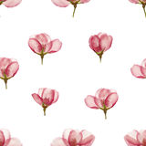 Apple. Seamless pattern texture of flowers. Floral background, p Royalty Free Stock Photos