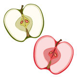 Apple sectional. Slices of green and red . Painted fruit, graphic art, cartoon. Vector illustration Stock Image