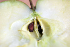 Apple Seed. A closeup view of the seed of a cut apple Royalty Free Stock Photo