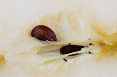 Apple seed Royalty Free Stock Image