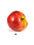 Apple and seed Royalty Free Stock Photo