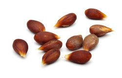 Apple Seed Stock Photos