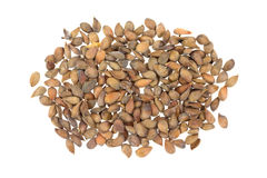 Apple Seeds Royalty Free Stock Images