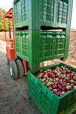 Apple shipping. Plastic ceates filled with picked Jonagold cultivar apples ready for shipping stock photos