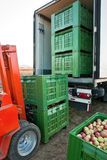Apple shipping. Forklift is loading crates in the truck. Plastic ceates filled with picked Jonagold cultivar apples are ready for shipping royalty free stock photos