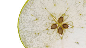 Apple slice. Seethrough apple slice; unusual seethrough texture and colour royalty free stock images
