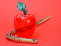 Apple and snake. Fake apple and snake on red background Royalty Free Stock Images