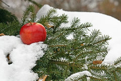 Apple on snow Stock Photo