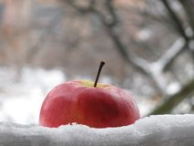Apple in a snow. View from window: apple in a snow Royalty Free Stock Image