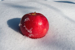 Apple on snow Royalty Free Stock Photography
