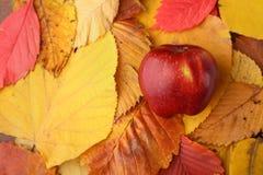 Apple sobre las hojas de otoño imagen de archivo
