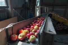 Apple-sorteermachine in een loods De scène van landbouwbedrijfmachines stock fotografie