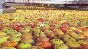 Apple sortering- och emballagefabrik stock video