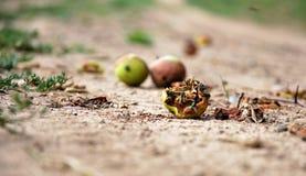 Apple spada ziemia Zdjęcia Royalty Free