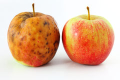Apple spoiled on white background Healthy and rotten apples. Spoiled one bad red apple on white background Healthy and rotten apples Stock Photo