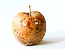 Apple spoiled on white background Royalty Free Stock Photo