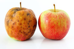Apple spoiled on white Healthy and rotten apples Stock Photo