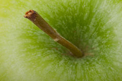 Apple stalk macro. Full frame Green Apple stalk close up background image Royalty Free Stock Photos