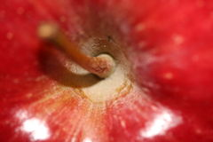 Apple stem. Close up image of a red delicious apple stem from above Royalty Free Stock Photo