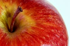 Apple Stem Royalty Free Stock Photo