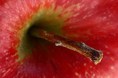Apple stem. Extreme macro shot of an apple stem revealing sharp, fine details royalty free stock photos